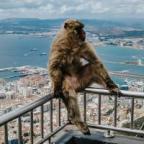 Гибралтар аватар