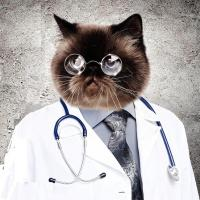 Доктор Котэ аватар
